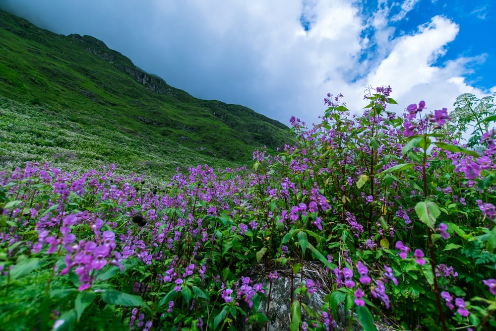 Ghangaria to Valley of Flowers