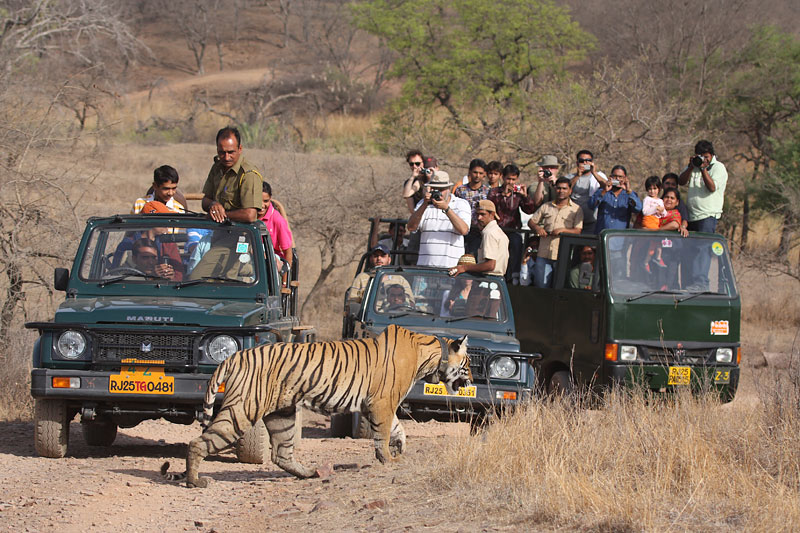 Wildlife NGOs in India