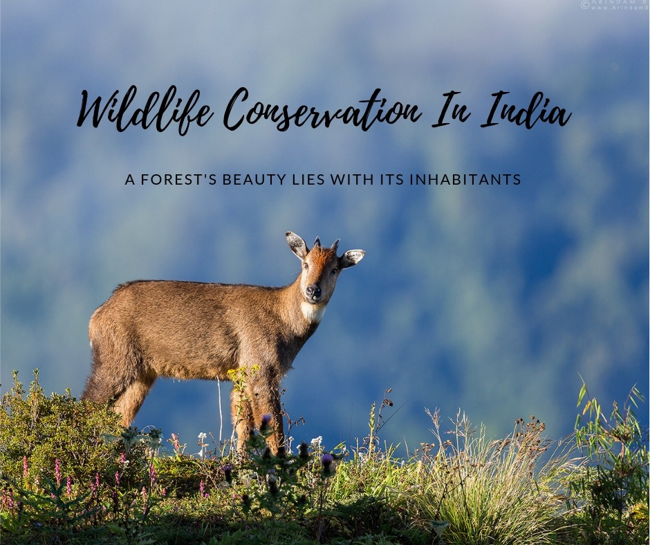 wildlife conservation efforts in india icse project introduction